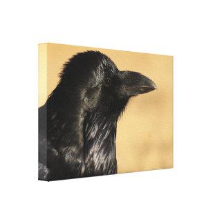 Retrato de un cuervo lona envuelta para galerias