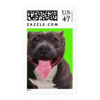 retrato de un dogo sello
