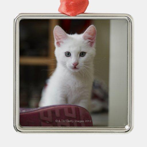 Retrato de un gatito blanco, Suecia Adorno