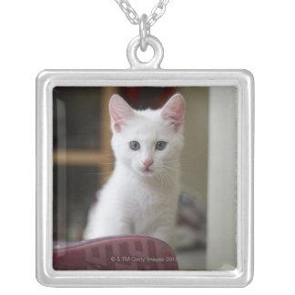 Retrato de un gatito blanco, Suecia Colgante Cuadrado