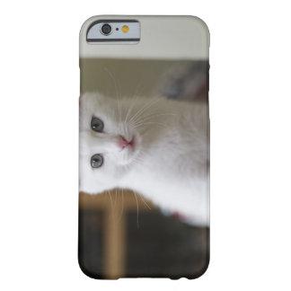 Retrato de un gatito blanco, Suecia Funda De iPhone 6 Barely There