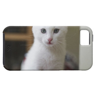 Retrato de un gatito blanco, Suecia iPhone 5 Fundas
