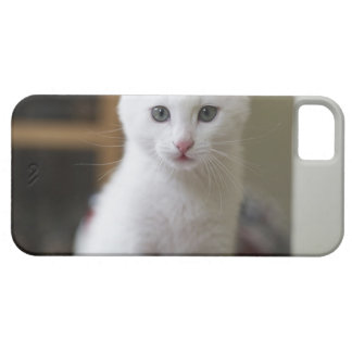 Retrato de un gatito blanco, Suecia iPhone 5 Case-Mate Protectores