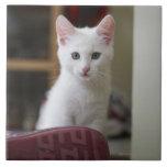 Retrato de un gatito blanco, Suecia Teja Ceramica