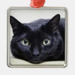 Retrato de un gato adornos de navidad