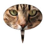 Retrato de un gato de Tabby lindo con el ojo direc Decoración De Tarta