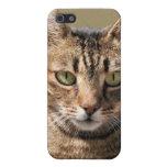Retrato de un gato de Tabby lindo con el ojo direc iPhone 5 Protectores