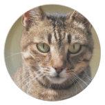 Retrato de un gato de Tabby lindo con el ojo direc Platos De Comidas