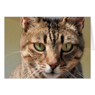 Retrato de un gato de Tabby lindo con el ojo Tarjeta De Felicitación