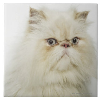 Retrato de un gato persa azulejo cuadrado grande