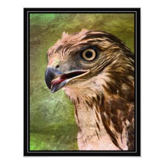 Retrato de un halcón fotografías