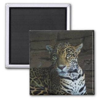 Retrato de un imán del jaguar