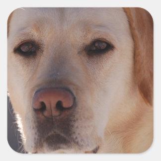 Retrato de un labrador retriever de oro colcomania cuadrada