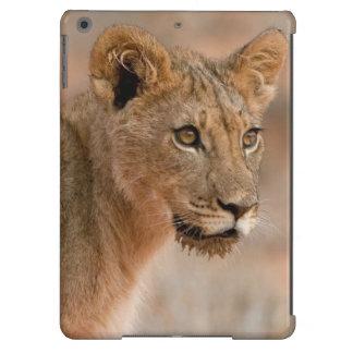 Retrato de un león masculino joven (Panthera Leo)