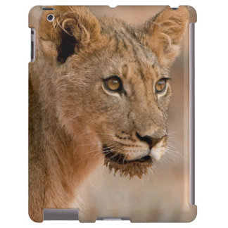 Retrato de un león masculino joven (Panthera Leo) Funda Para iPad