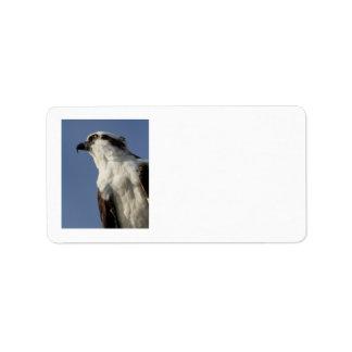 Retrato de un osprey etiquetas de dirección