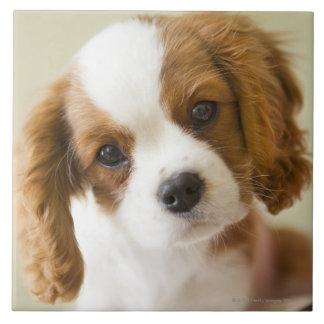 Retrato de un perrito del perro de aguas de rey Ch Azulejo Cuadrado Grande
