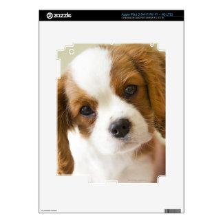 Retrato de un perrito del perro de aguas de rey Ch iPad 3 Skin