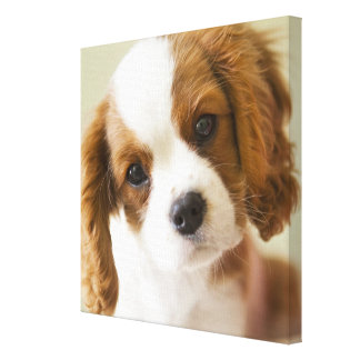 Retrato de un perrito del perro de aguas de rey Ch Impresiones En Lona Estiradas