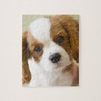 Retrato de un perrito del perro de aguas de rey Ch Puzzle Con Fotos