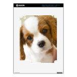 Retrato de un perrito del perro de aguas de rey Ch iPad 3 Skins
