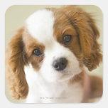 Retrato de un perrito del perro de aguas de rey calcomanía cuadradas personalizada