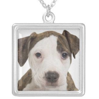 Retrato de un perrito del pitbull colgante cuadrado