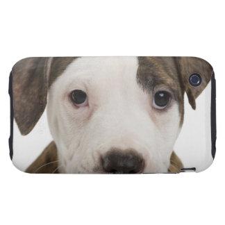 Retrato de un perrito del pitbull iPhone 3 tough carcasas