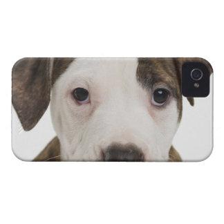 Retrato de un perrito del pitbull iPhone 4 cárcasas