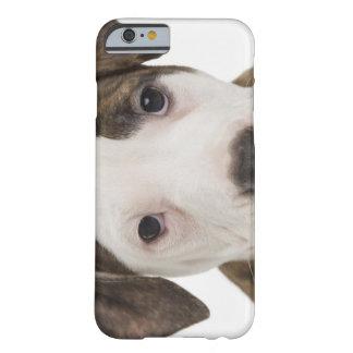 Retrato de un perrito del pitbull funda de iPhone 6 barely there