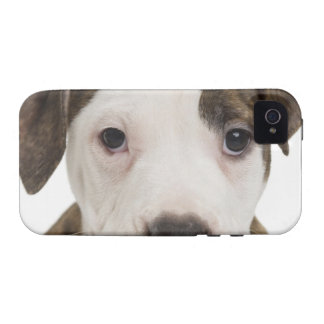 Retrato de un perrito del pitbull Case-Mate iPhone 4 fundas