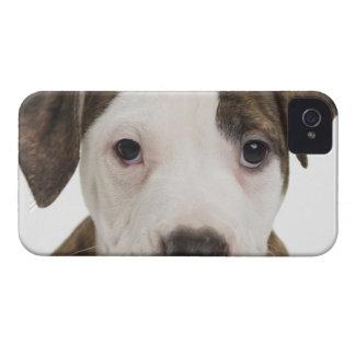 Retrato de un perrito del pitbull iPhone 4 cobertura