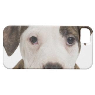 Retrato de un perrito del pitbull iPhone 5 carcasas