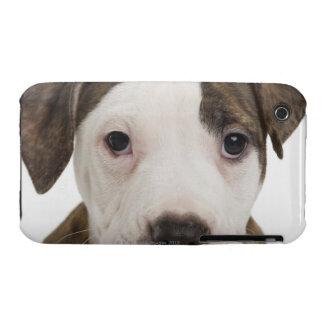 Retrato de un perrito del pitbull Case-Mate iPhone 3 protectores
