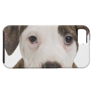 Retrato de un perrito del pitbull iPhone 5 protector