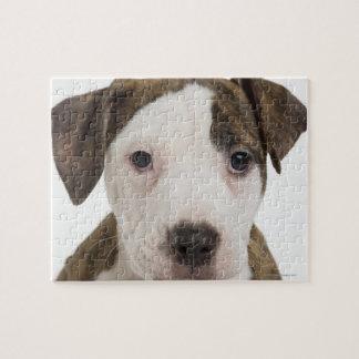 Retrato de un perrito del pitbull rompecabeza con fotos
