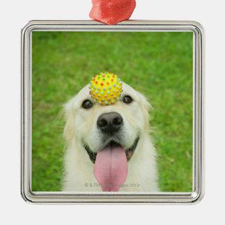 Retrato de un perro con una bola en su nariz adorno navideño cuadrado de metal