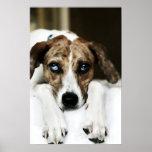 Retrato de un perro de la Perro-Mezcla Poster