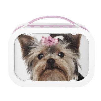 Retrato de un perro de Yorkshire Terrier
