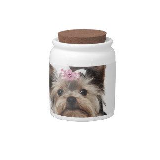 Retrato de un perro de Yorkshire Terrier Jarras Para Caramelos