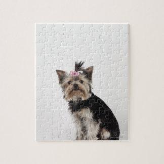 Retrato de un perro de Yorkshire Terrier Puzzle