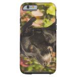 Retrato de un perro funda para iPhone 6 tough