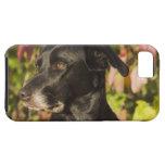 Retrato de un perro iPhone 5 funda
