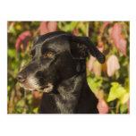 Retrato de un perro tarjeta postal