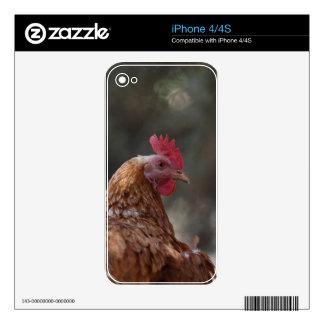 Retrato de un pollo en una granja calcomanía para iPhone 4S