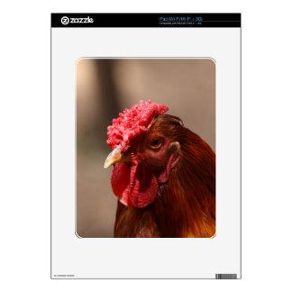 Retrato de un pollo en una granja calcomanías para iPad