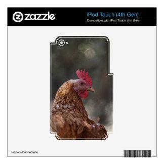 Retrato de un pollo en una granja iPod touch 4G skins