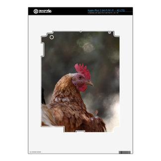 Retrato de un pollo en una granja pegatina skin para iPad 3