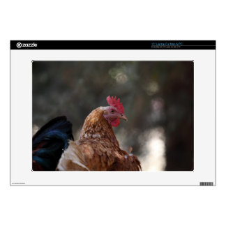 Retrato de un pollo en una granja skins para 38,1cm portátiles