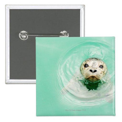 Retrato de un sello en agua pin cuadrado